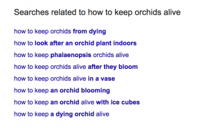 example of related search terms section in Google for how to keep orchids alive